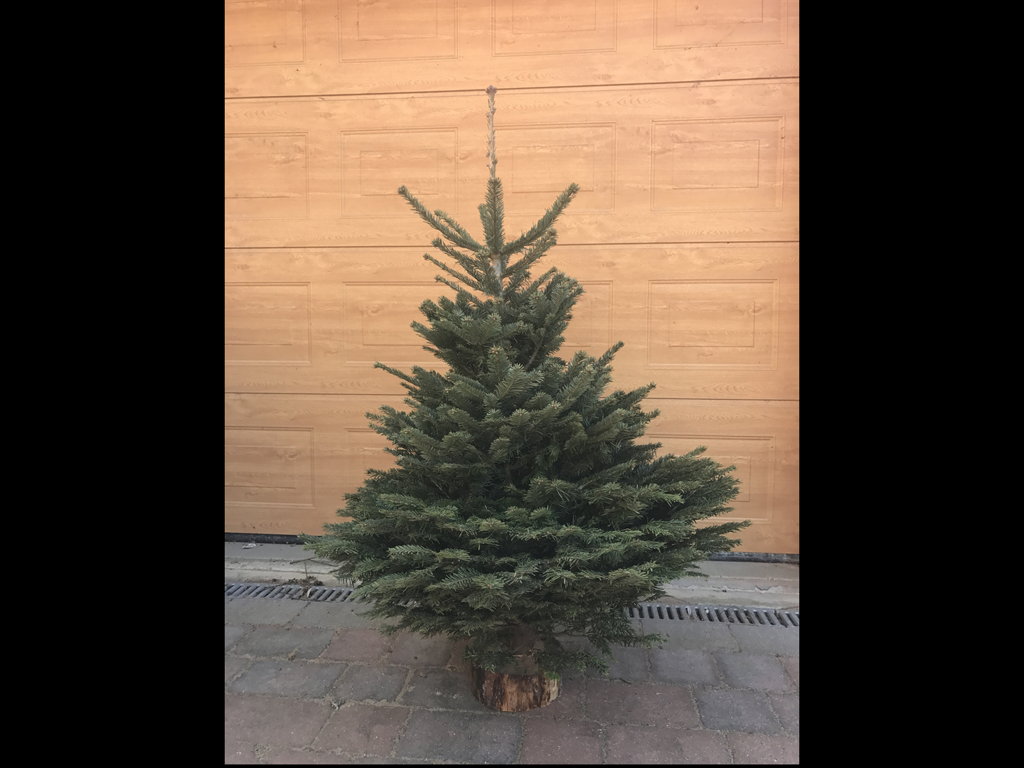Wholesale Cut & Blocked Christmas Trees